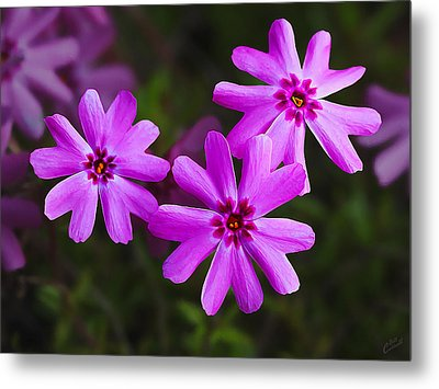 Three In The Pink Metal Print by ABeautifulSky Photography