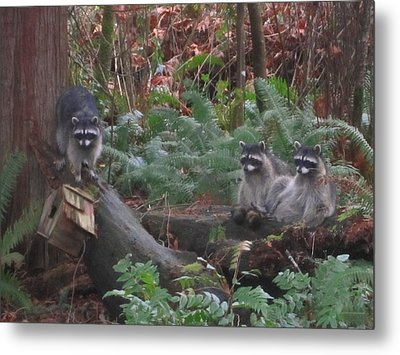 Three Is A Crowd Metal Print by Kym Backland