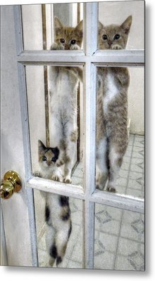 Three Kitten Door Deco Metal Print