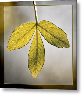 Metal Print featuring the photograph Three Leaves by Jaki Miller