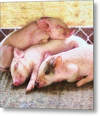 Three Little Piglets - Square Metal Print