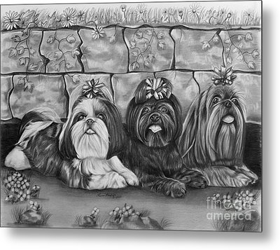 Three Little Shih Tzus Metal Print by Lena Auxier