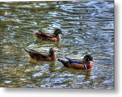 Three Mallard Ducks Metal Print