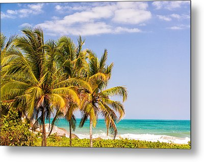 Three Palm Trees And Caribbean Metal Print