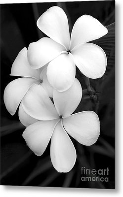 Three Plumeria Flowers In Black And White Metal Print by Sabrina L Ryan