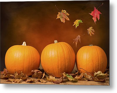 Three Pumpkins Metal Print by Amanda Elwell