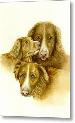 Three Toller Dogs Metal Print