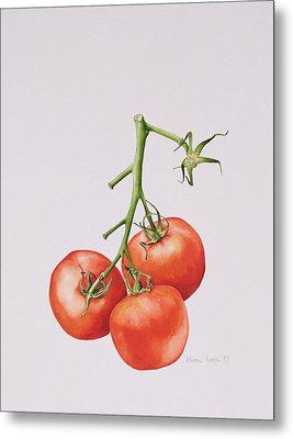 Three Tomatoes On The Vine Metal Print by Alison Cooper