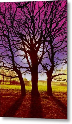 Three Trees Metal Print by David Davies