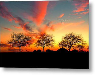 Three Trees In The Park Metal Print