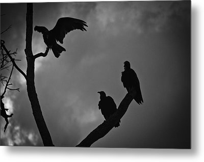 Metal Print featuring the photograph Three Vultures by Bradley R Youngberg