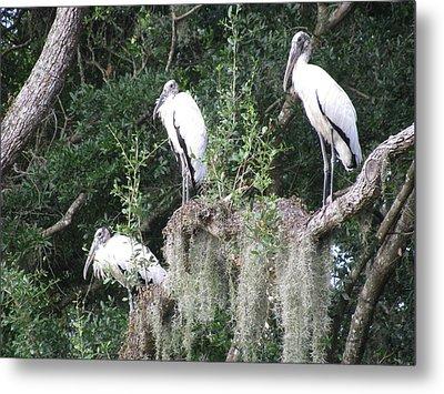 Three Wood Storks Metal Print
