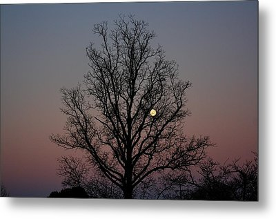 Through The Boughs Landscape Metal Print by Dan Stone