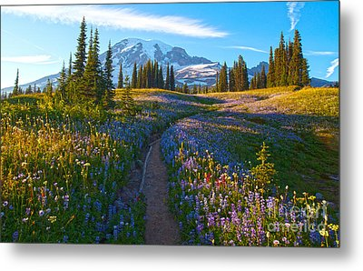 Through The Golden Meadows Metal Print by Mike Reid