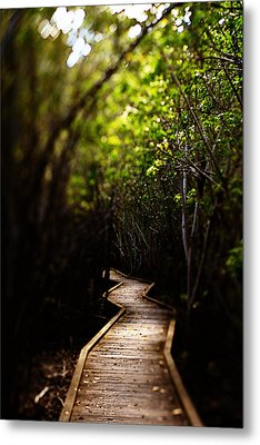 Through The Mangroves Metal Print by Heather Green