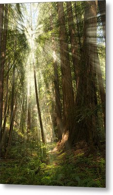 Through The Trees Metal Print by Mick Burkey
