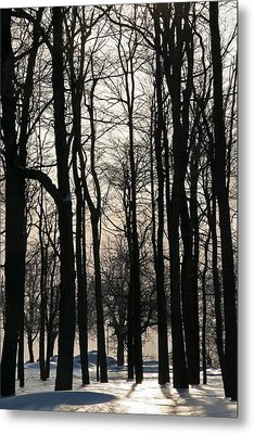 Through The Winter Trees Metal Print by Heather Allen