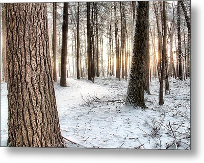 Thru The Pines Metal Print by Andrea Galiffi