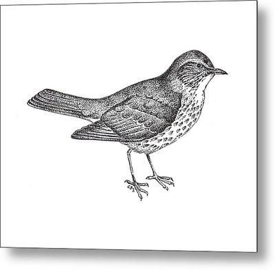 Thrush Bird Drawing Metal Print