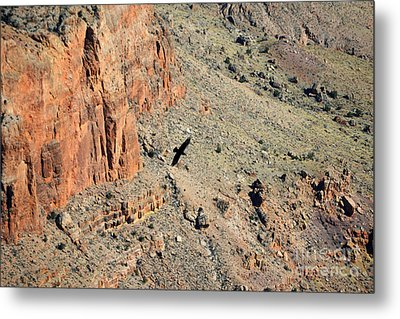 Thunderbird Gliding Over Cliff In Grand Canyon National Park Metal Print