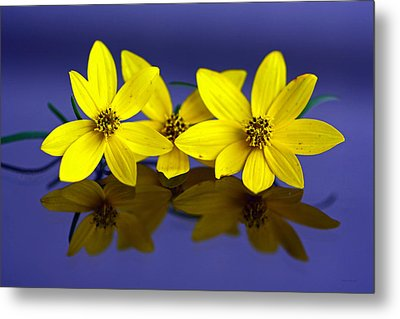 Metal Print featuring the photograph Tickseed Trio by Suzanne Stout