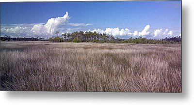Metal Print featuring the photograph Tidal Marsh On Roanoke Island by Greg Reed