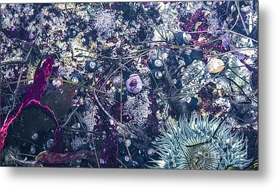 Metal Print featuring the mixed media Tidal Pool Assortment by Terry Rowe