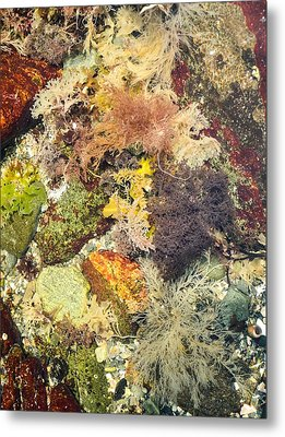 Tidal Pool Color Metal Print by Debbie Green