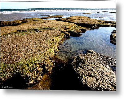 Metal Print featuring the photograph Tide Pool II by Amanda Holmes Tzafrir