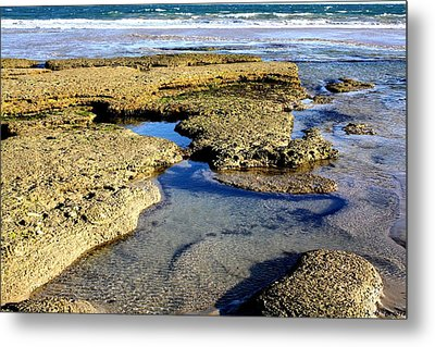 Metal Print featuring the photograph Tide Pool IIi by Amanda Holmes Tzafrir