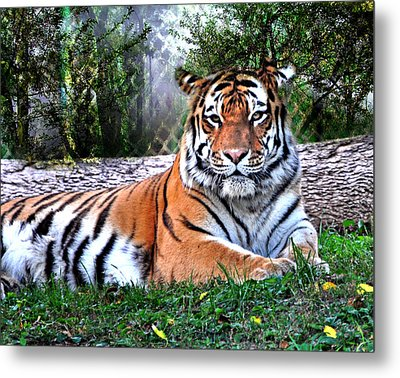 Metal Print featuring the photograph Tiger 2 by Marty Koch