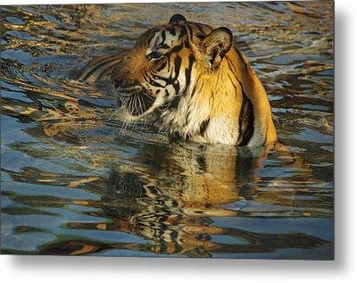 Tiger 3 Metal Print