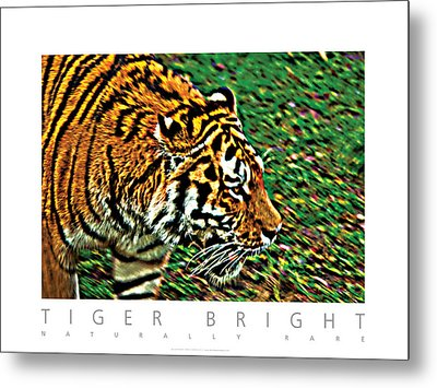 Tiger Bright  Naturally Rare Poster Metal Print by David Davies