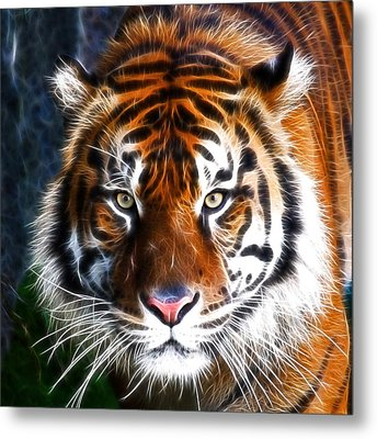 Tiger Close Up Metal Print by Steve McKinzie