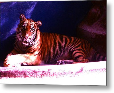 Metal Print featuring the photograph Tiger Cub by Victoria Lakes