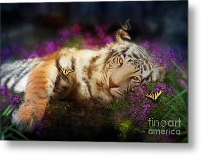 Tiger Dreams Metal Print by Aimee Stewart