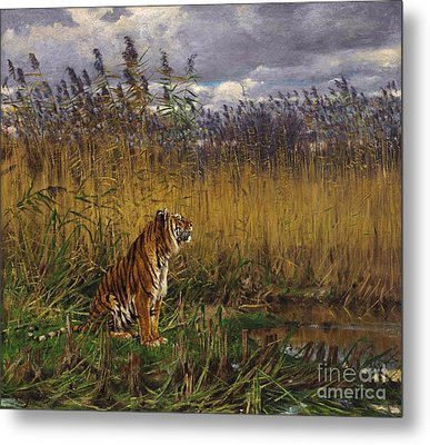 Tiger In A Landscape Metal Print by Pg Reproductions