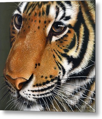 Tiger Metal Print by Jurek Zamoyski