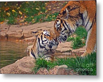 Tiger Kiss Metal Print by David Rucker