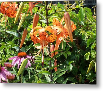 Tiger Lilies Metal Print by Catherine Gagne