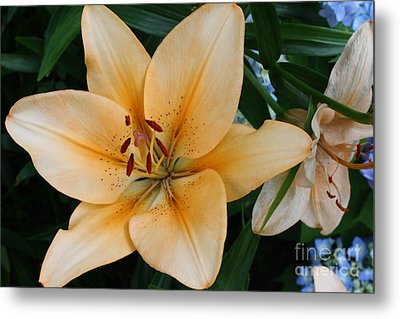 Metal Print featuring the photograph Tiger Lily by Dora Sofia Caputo Photographic Art and Design