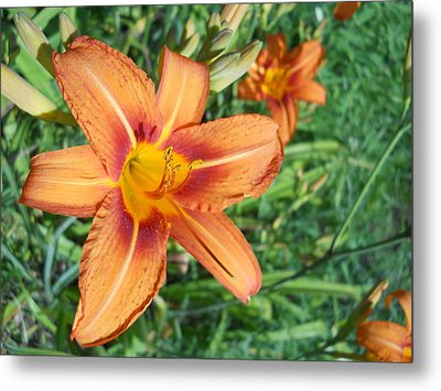 Metal Print featuring the photograph Tiger Lily by Yolanda Raker