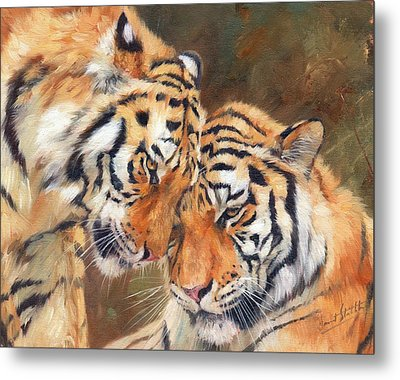 Tiger Love Metal Print by David Stribbling