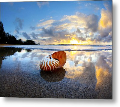 Tiger Nautilus Sunrise Metal Print by Sean Davey