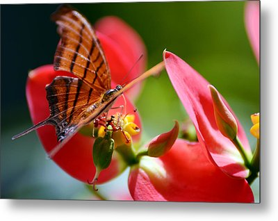 Tiger Stripped Butterfly Metal Print