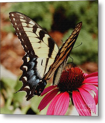 Metal Print featuring the photograph Tiger Swallowtail  by James C Thomas