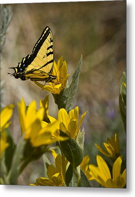 Metal Print featuring the photograph Tiger Swallowtail Butterfly by Janis Knight