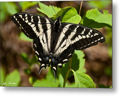 Metal Print featuring the photograph Tiger Swallowtail Butterfly by Jeff Goulden