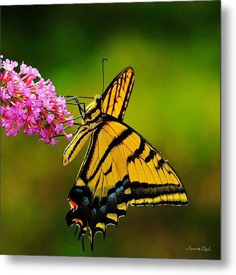 Tiger Swallowtail Butterfly Metal Print by Karen Slagle
