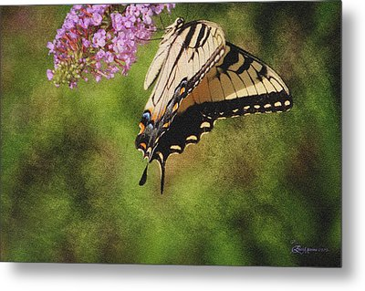 Tiger Swallowtail-featured In Photography And Textures And Harmony-happiness Groups Metal Print by EricaMaxine  Price